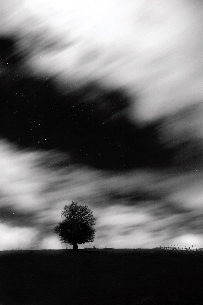 Long exposure tree - Alex Axon Photo