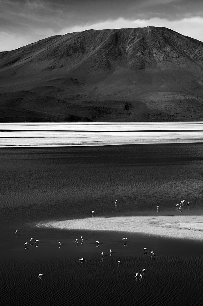 Flamingo Laguna Colorada - Alex Axon Photo
