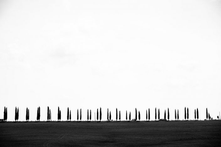 Toscana minimalism landscape trees Alex Axon Photo