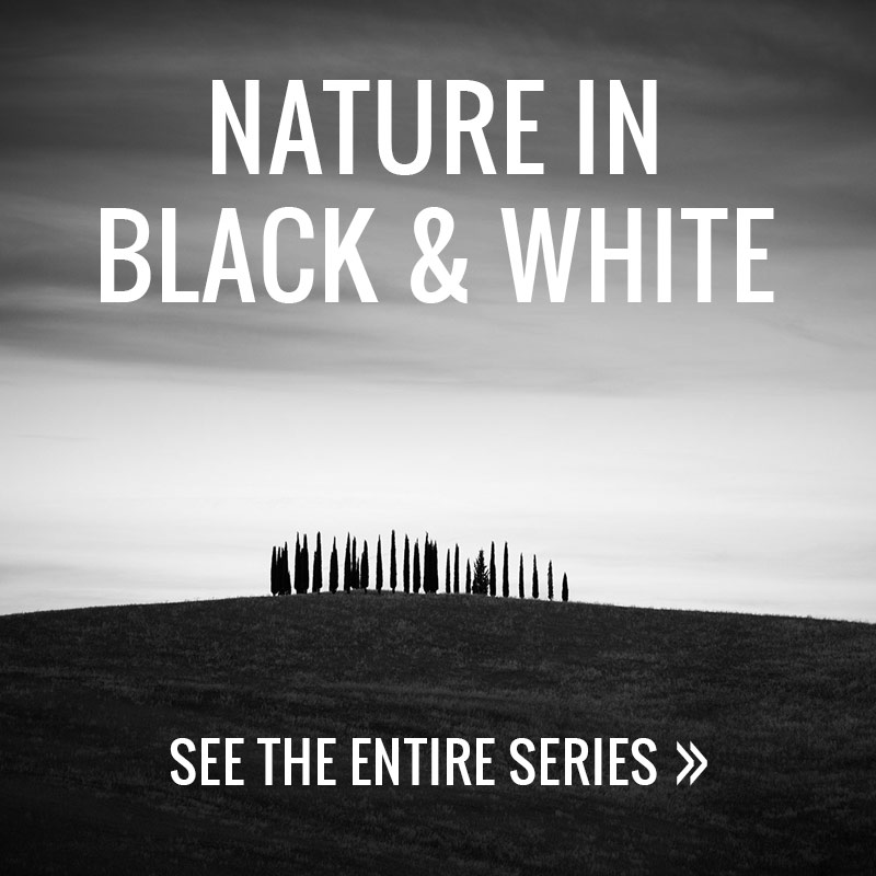Nature in Black and White - Alex Axon Photography