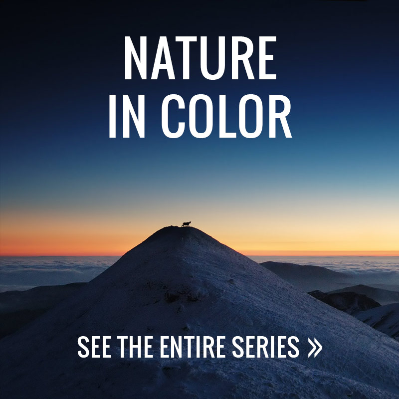 Nature in Color - Alex Axon Photography