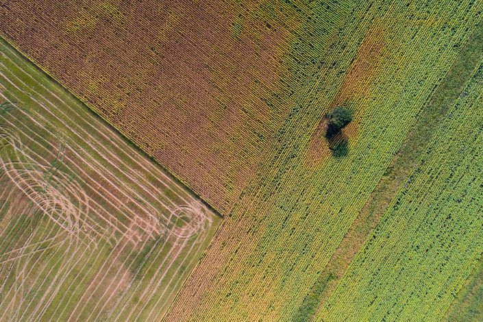 Rural Field Tree Drone Photography Alex Axon